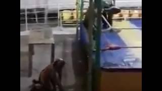 HIJO DE SANGRE CHICANA SUFRE QUEMADURAS DE PRIMER Y SEGUNDO GRADO