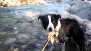 ボーダーコリーのレオン http://blog.goo.ne.jp/leon1783/ いつもの川が...