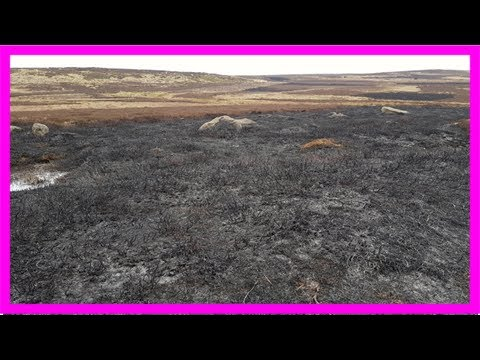 A vote to end grouse shooting on council-owned land could help bring Britain's moors back from the
