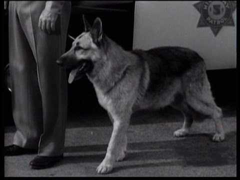 "Download Lassie - Episode #260 - ""The Outlaw"" - Season 8 Ep. 5 - 10/08/1961"