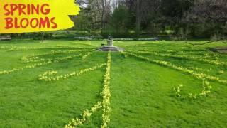The Daffodil Parterre