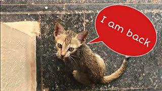 Stray kitten came back to me after a few days of absence|hungry stray kitten just needs food| Mar fy thumbnail