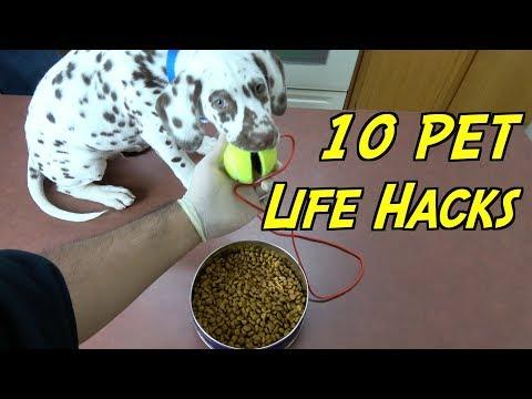10-dog-and-cat-hacks---(pet-life-hacks)-featuring-my-dalmatian-|-nextraker