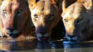 What A Wonderful World - David Attenborough/BBC