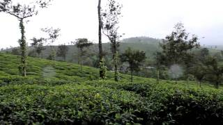Harrison's Malayalam Tea Estate View - Wayanad!!!