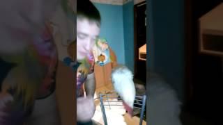 Петух поёт концертные песни! Это нереально! Смотреть всем!