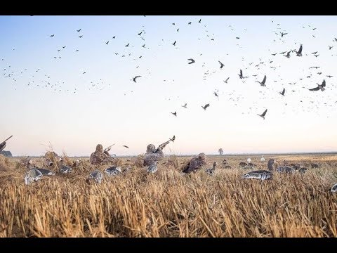 Download Goose Hunting in Saskatchewan, Canada with Outdoors International