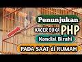 Penunjukan Kacer Birahi Pada Saat Dirumah  Mp3 - Mp4 Download