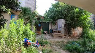 Удивительные животные! Жизнь собак и кошек в Сочи SOCHI-ЮДВ |Квартиры в Сочи |Отдых Сочи