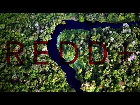Can REDD+ Save Indonesia's Forests?