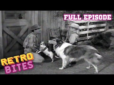 Lassie   Rock Hound   Full Episodes  🐕