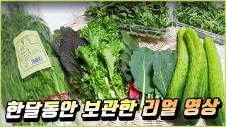 야채보관법, 채소 오래 보관하는 팁 / 한달 보관한 리…