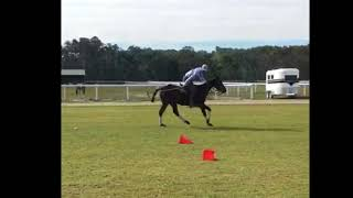 Stealth   Surfing Cowboys Polo and Racing   August 2018