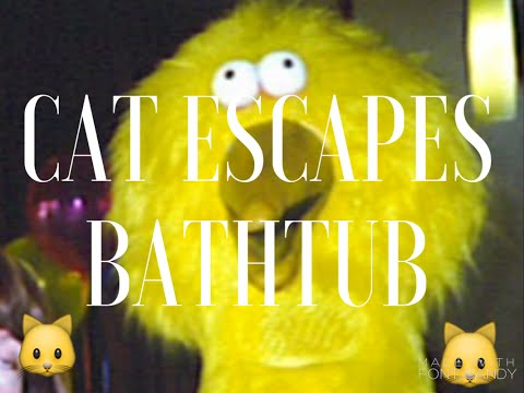 CAT ESCAPES BATHTUB!!