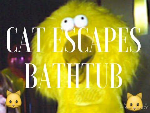 CAT ESCAPES BATHTUB!!