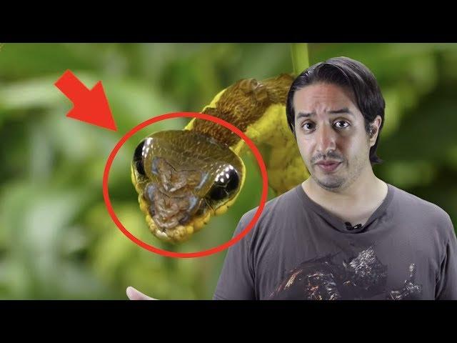 10 animales que se DISFRAZAN para no ser COMIDOS 🐛🐜🐍 - Hey Arnoldo