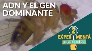 ADN: Explicado para niños | Series educativas en línea: Experiementa