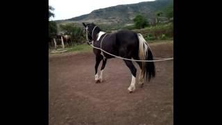 Santa Rita, Jalisco: Adiestramiento de Caballos de Rienda Charra y parte de La Alta Escuela, 1