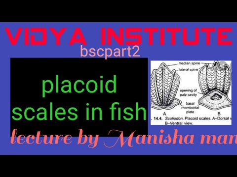 Placoid Scale In Fish By M.R.mam