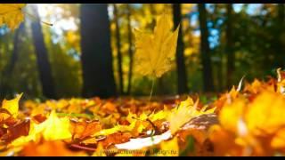 Анимированные обои для рабочего стола. Листья желтые.(Анимированные обои для рабочего стола, Windows... Осенний листопад! Скачать бесплатно можете здесь: http://screensaverdes..., 2013-03-04T06:46:51.000Z)