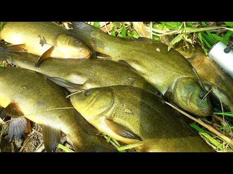 Ловля КРУПНОГО ЛИНЯ на УДОЧКУ! Рыбалка с ночевкой.