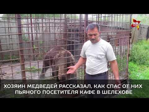 Хозяин медведей рассказал, как спас от них пьяного посетителя кафе в Шелехове 1
