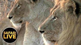 safariLIVE - Sunrise Safari - August 24, 2019