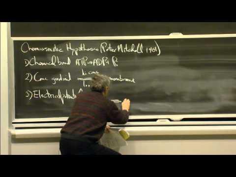 Glycolysis, Respiration, and Fermentation | MIT 7.01SC Fundamentals of Biology