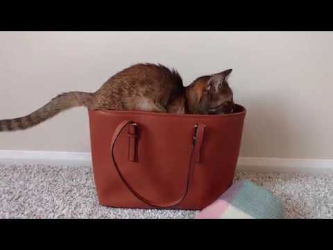 Cat and kitten are Hide and Seek world champions. Cat box. Cute and funny video