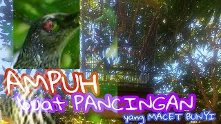 Download Lagu PANCINGAN CUCAK KELING | CK | PERLING mp3