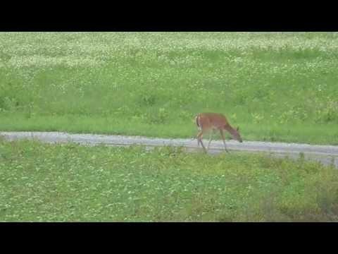 Runkles100 Evan 328 yds deer 338 lapua