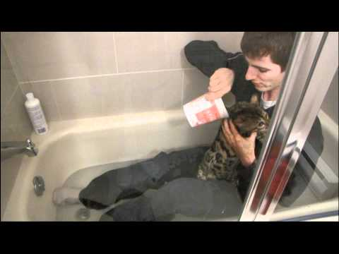 Bath Time!!! Linus Cat Tips #18