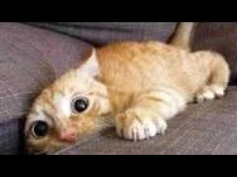 Top 200 Funny Animals Vines __ FunnyVines