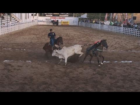 Brazilian Rodeo-Style Sport Banned for Animal Cruelty