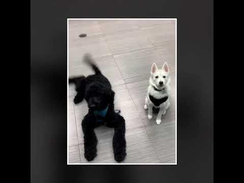 M&M Pet Boutique & Supplies Doggie Daycare