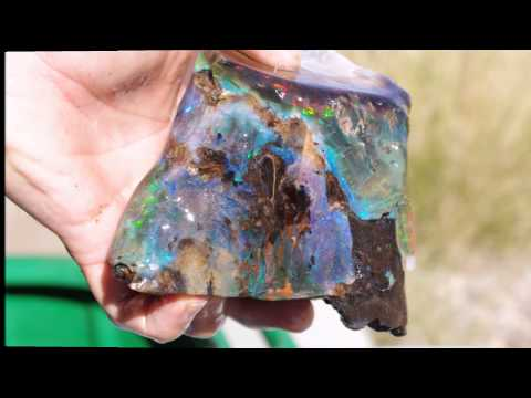 Opal With Sillicated/petriefied Wood  Specimen From Virgin Valley, Nevada