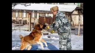Прайд кавказских собак в Херсоне  (Приозерное)
