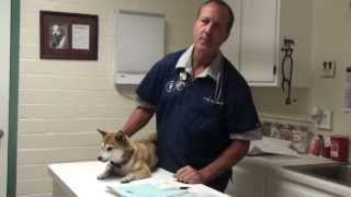 Dog Coughing From Allergies