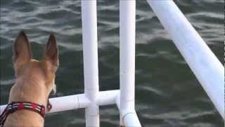 """dachshund"" 101 ""skinny Dipping"" Dog's Are Jealous! Safety Harbor Marina, Pinellas County, Florida"