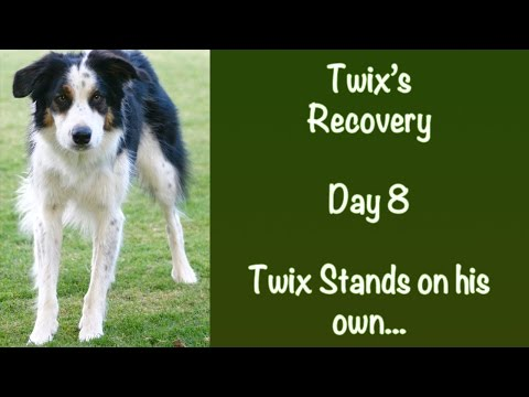 Day 8: Twix stands for the first time
