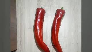 Benih Cabe Super Jumbo Sweet Italian Pepper-Isi 5 Biji