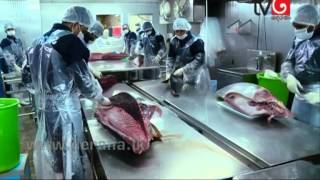 The Other Side - Fish Export