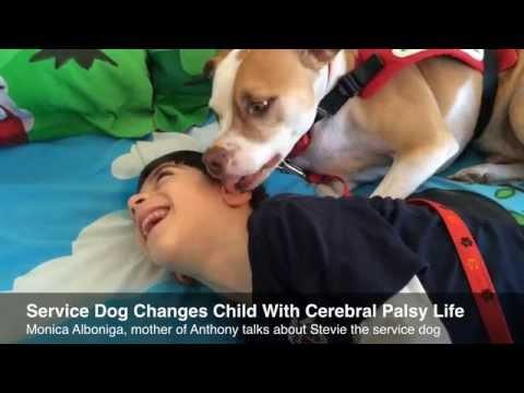 Service dog assists Sunrise boy with cerebral palsy