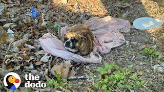 Sweetest Dog Found Shaking In A Ditch | The Dodo Faith = Restored
