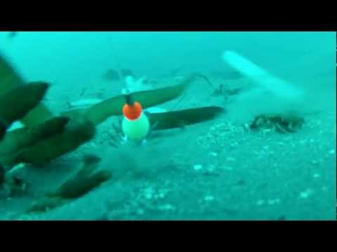 Thumbnail: GoPro Hero 2: Bottom of the Ocean - Octopus on the Line - Raw Video
