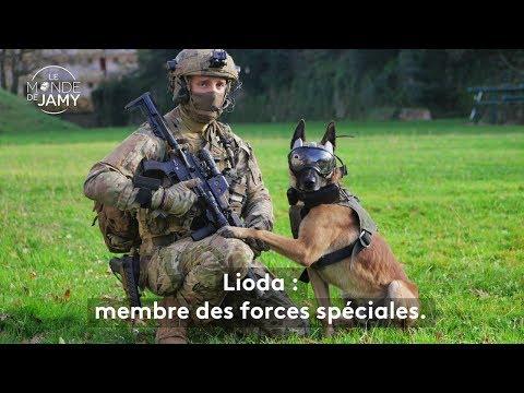 Le meilleur du monde de Jamy – Lioda, malinois et membre des forces spéciales