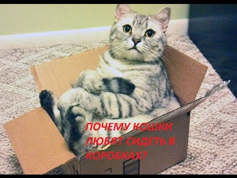 Вопрос: Почему коты так любят сидеть на одежде хозяев?