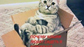 Все обо всем - Почему кошки любят сидеть в коробках?