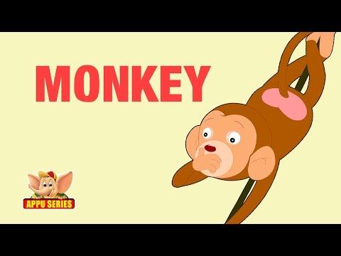 Animal Sounds - Monkey