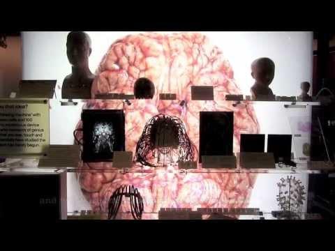 Genes and Brain Sex